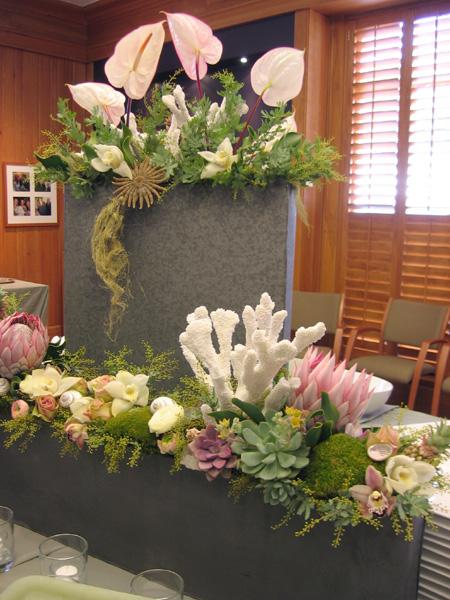 coralsucculent1.jpg
